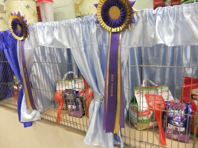 Cat Show Best in Show pen
