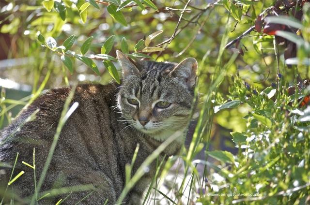 cat blog photo
