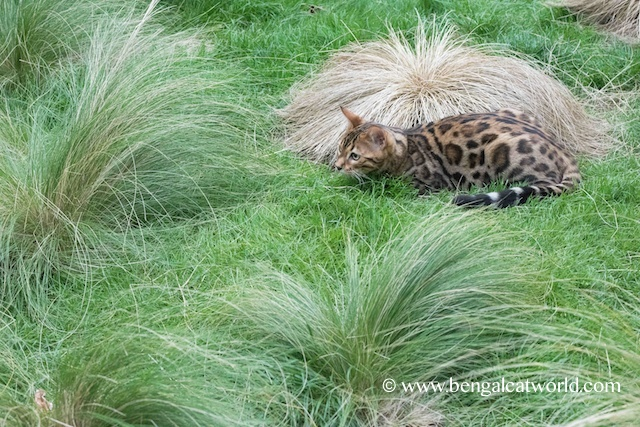 Spike's a fan of the grasses too!